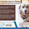 Requisitos para Viajar con Perros