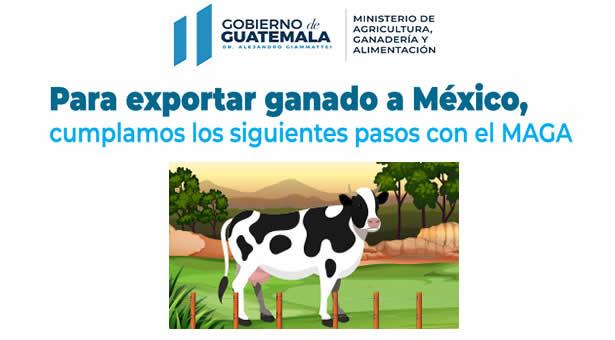 Pasos a Cumplir para Exportar Ganado a México