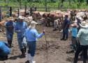 Guatemala exporta nuevo contingente de ganado bovino a México
