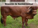 Dirección de Sanidad Animal