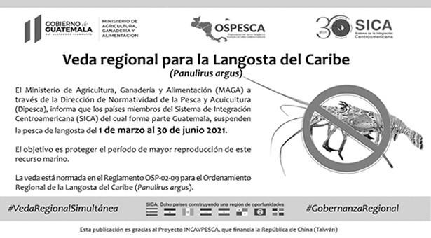 Veda Regional para la Langosta del Caribe (Panulirus argus)