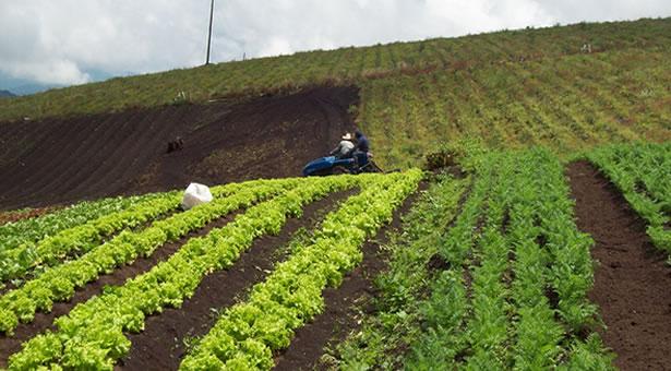 Ministerio de agricultura ganaderia y alimentacion for Ministerio de ganaderia